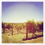 Hello vineyards! Just arrived in the Margaret River...