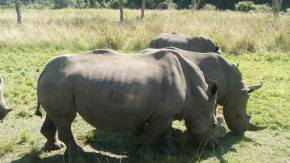 SOUTH AFRICA: Rhinos and relaxation