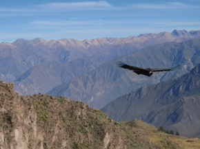 PERU: In quest of the condor