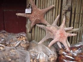 Starfish, Qingping Market