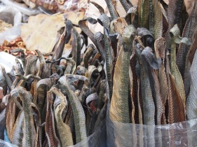 Fishy bits at Qingping Market, Guangzhou
