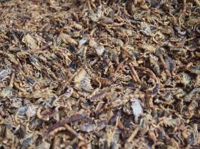 Scorpions, Qingping Market