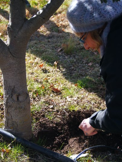Sherry gets digging for the truffle
