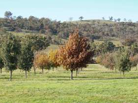 The paddocks at Ruffles Estate