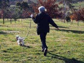 The truffle hunt begins