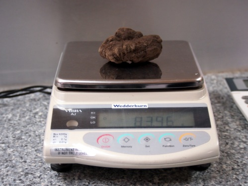 Weighing the truffle